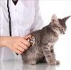 Ветеринарные клиники в Шаблыкино